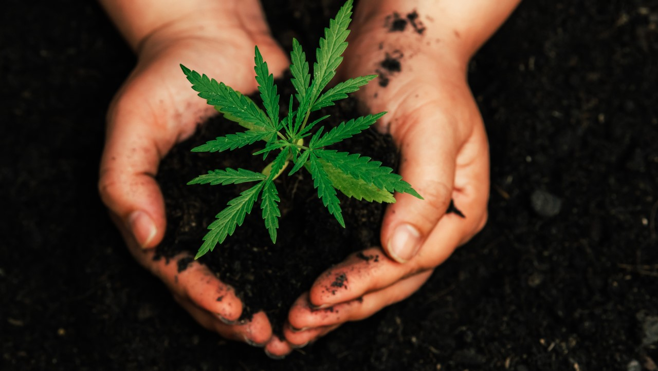 Medical Marijuana for Cancer Treatment